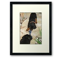 Rottweiler 'Tug of Love' Framed Print