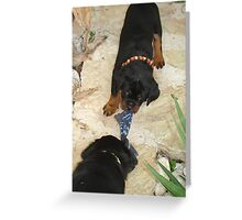 Rottweiler 'Tug of Love' Greeting Card