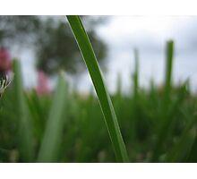 Blade of Grass Photographic Print