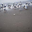Ocean Beach by Tama Blough