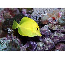 Tropical fish Photographic Print