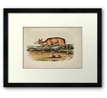 James Audubon - Quadrupeds of North America V2 1851-1854  Black Tailed Deer Framed Print
