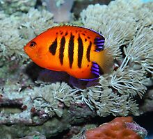 Tropical fish by Marco7r7