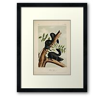James Audubon - Quadrupeds of North America V1 1851-1854  Black Squirrel Framed Print