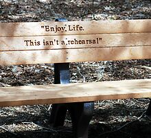 a bench to think upon  by Michelle BarlondSmith