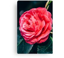 Pink Rose and Water Drops Canvas Print