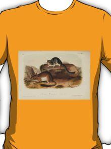 James Audubon - Quadrupeds of North America V1 1851-1854  Rocky Mountain Neotoma T-Shirt