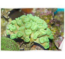 Beautiful coral Poster