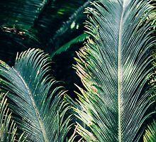 Palm Tree Leaves by PatiDesigns