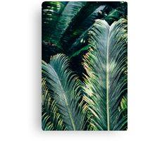 Palm Tree Leaves Canvas Print