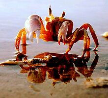 I'm Crabby by Clive