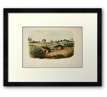 James Audubon - Quadrupeds of North America V1 1851-1854  Wilson's Meadow Mouse Framed Print