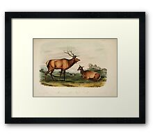 James Audubon - Quadrupeds of North America V2 1851-1854  American Elk Wapite Deer Framed Print