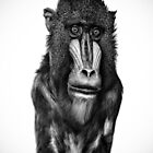 Soulful Simian by Thomas Gehrke