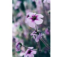 Purple Flower Closeup Photographic Print