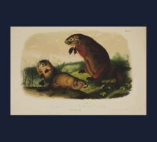 James Audubon - Quadrupeds of North America V1 1851-1854  Maryland Marmot Woodchuck Groundhog Kids Tee