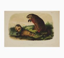 James Audubon - Quadrupeds of North America V1 1851-1854  Maryland Marmot Woodchuck Groundhog Kids Tee