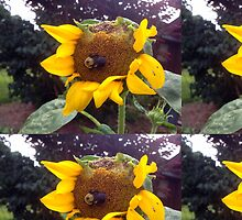 Bumble Bee on Half Eaten Sunflower by CrissyAnderson