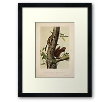 James Audubon - Quadrupeds of North America V3 1851-1854  Frement's Squirrel, Sooty Squirrel Framed Print