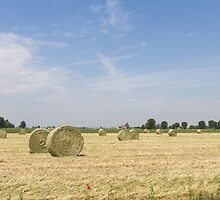 Agriculture landscape by Marco7r7