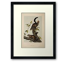 James Audubon - Quadrupeds of North America V3 1851-1854  Collies Squirrel Framed Print
