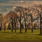 Grove of Trees by Sheryl Gerhard