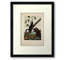 James Audubon - Quadrupeds of North America V3 1851-1854  Weasel Like Squirrel, Large Louisiana Black Squirrel Framed Print