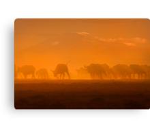 Buffalo in the dust, Amboseli National Park, Kenya, Africa. Canvas Print