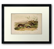 James Audubon - Quadrupeds of North America V3 1851-1854  Yellow Cheeked Meadow Mouse Framed Print