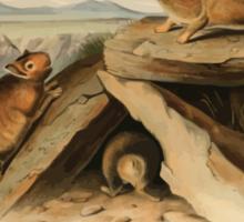 James Audubon - Quadrupeds of North America V2 1851-1854  Little Chief Hare Sticker