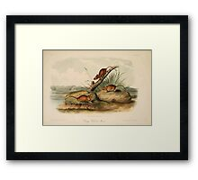 James Audubon - Quadrupeds of North America V2 1851-1854  Orange Colored Mouse Framed Print