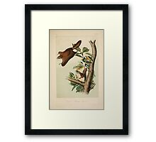 James Audubon - Quadrupeds of North America V1 1851-1854  Oregon Flying Squirrel Framed Print