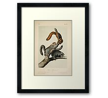 James Audubon - Quadrupeds of North America V1 1851-1854  Cat Squirrel Framed Print