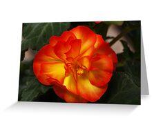 Orange Begonia Greeting Card