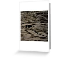 Swimming Coot - photograph Greeting Card