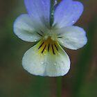 Wild flower in spring by Antanas