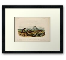 James Audubon - Quadrupeds of North America V3 1851-1854  Townsend's Arvicola and Sharp Nosed Avicola and Bank Rat Framed Print