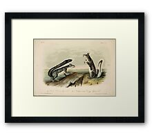 James Audubon - Quadrupeds of North America V3 1851-1854  Col Albert's Squirrel, California Grey Squirrel Framed Print