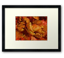 Curling Tulip Abstract 21 Framed Print