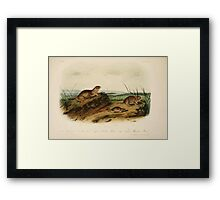 James Audubon - Quadrupeds of North America V3 1851-1854  American Tonslik, Oregon Meadow Mouse, Texan Meadow Mouse Framed Print