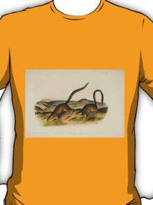 James Audubon - Quadrupeds of North America V2 1851-1854  Annulated Marmot Squirrel T-Shirt