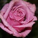 *Pink Rose* by Van Coleman
