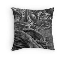 Moreton Bay Fig  Throw Pillow
