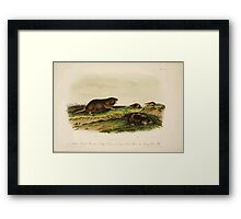 James Audubon - Quadrupeds of North America V3 1851-1854  Southern Pouched Rat, Dekay's Shrew, Long Nosed Shrew, Silvery Shrew Mole Framed Print
