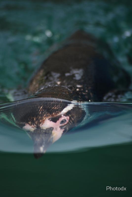 Underwater penguin by Photodx