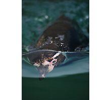 Underwater penguin Photographic Print