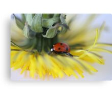 Ladybug and Dandelion Canvas Print