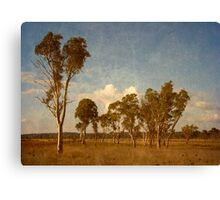 Thunderbolt Country - Uralla, Northern Tablelands, NSW, Australia Canvas Print