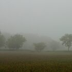 i like foggy days... fog simplifies our view by removing all the clutter... by Jenny Ryan