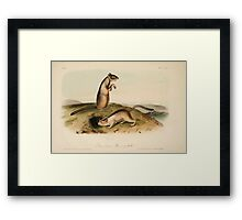 James Audubon - Quadrupeds of North America V1 1851-1854  Douglasses Spermophile Framed Print